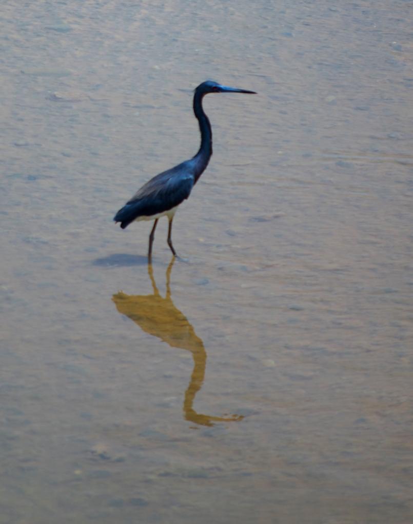 bird reflextion