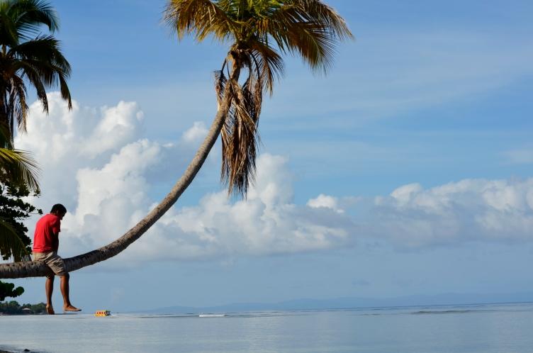 elias on palm tree