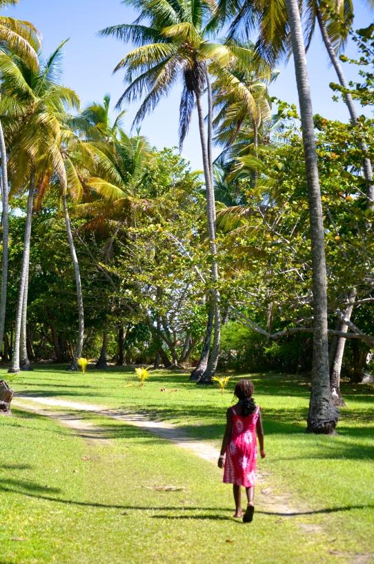 nic walks in palmtree path