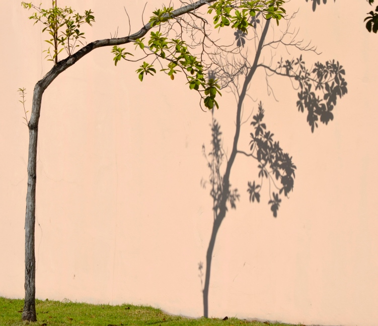 bent tree shad