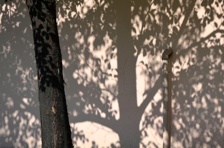 big shadow little tree