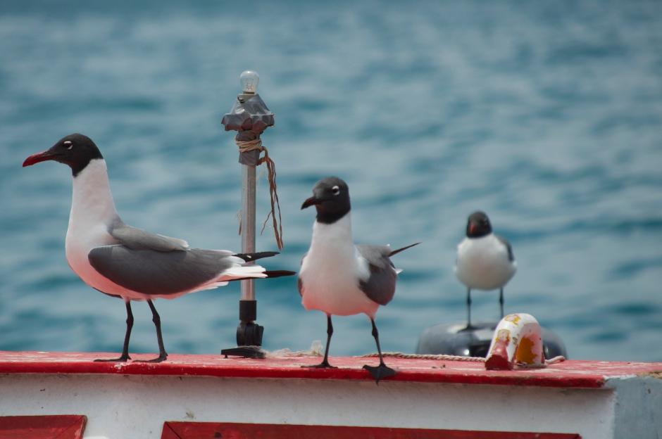 birdsonboat